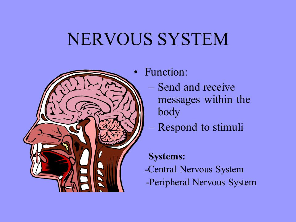 NERVOUS SYSTEM Function: Send and receive messages within the body