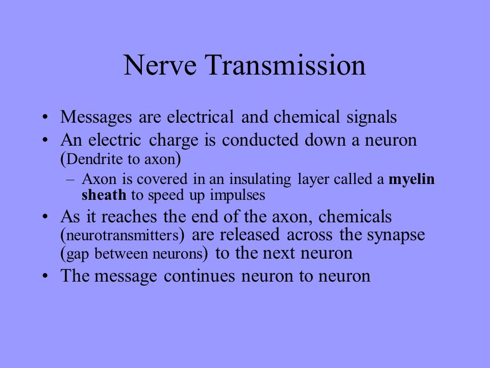 Nerve Transmission Messages are electrical and chemical signals