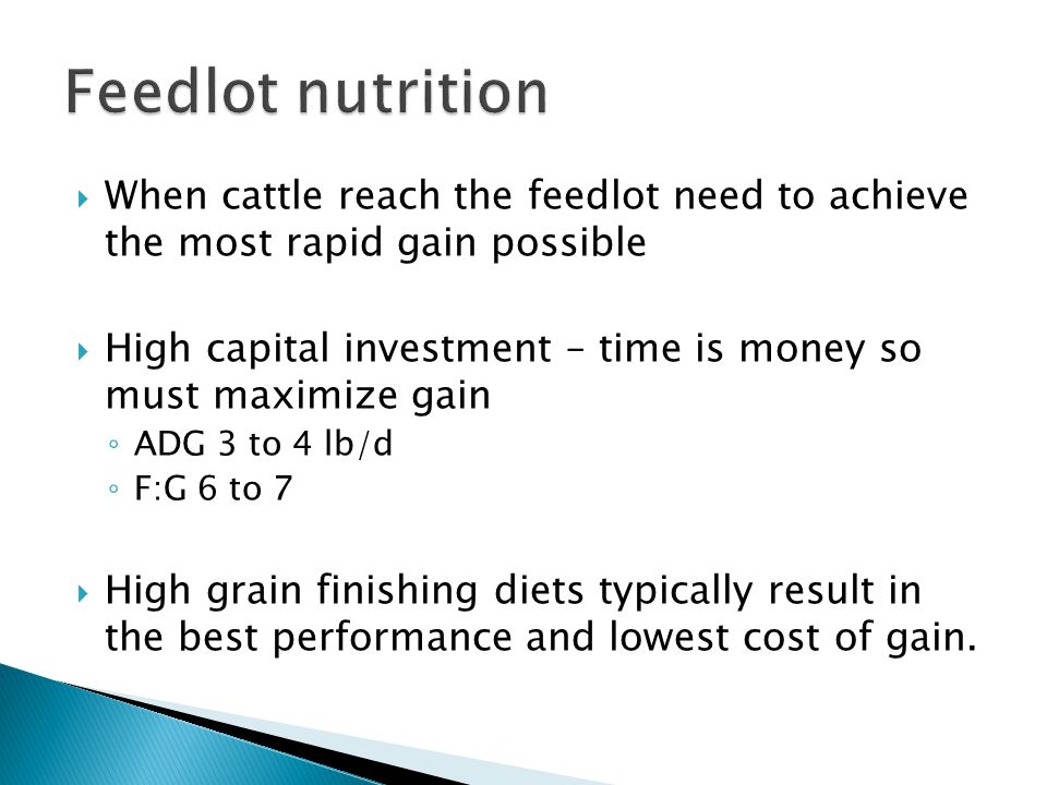 Feedlot nutrition When cattle reach the feedlot need to achieve the most rapid gain possible.
