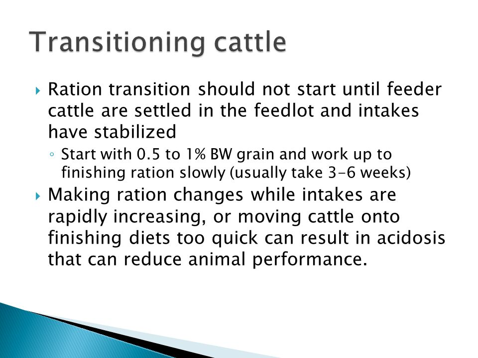 Transitioning cattle Ration transition should not start until feeder cattle are settled in the feedlot and intakes have stabilized.