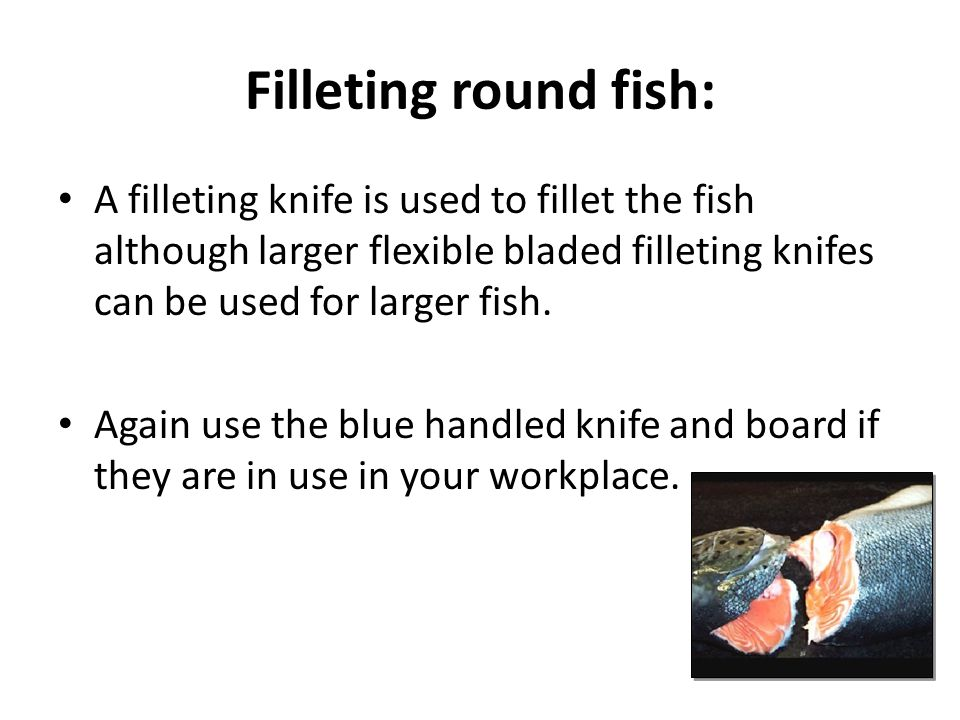 Filleting round fish: A filleting knife is used to fillet the fish although larger flexible bladed filleting knifes can be used for larger fish.