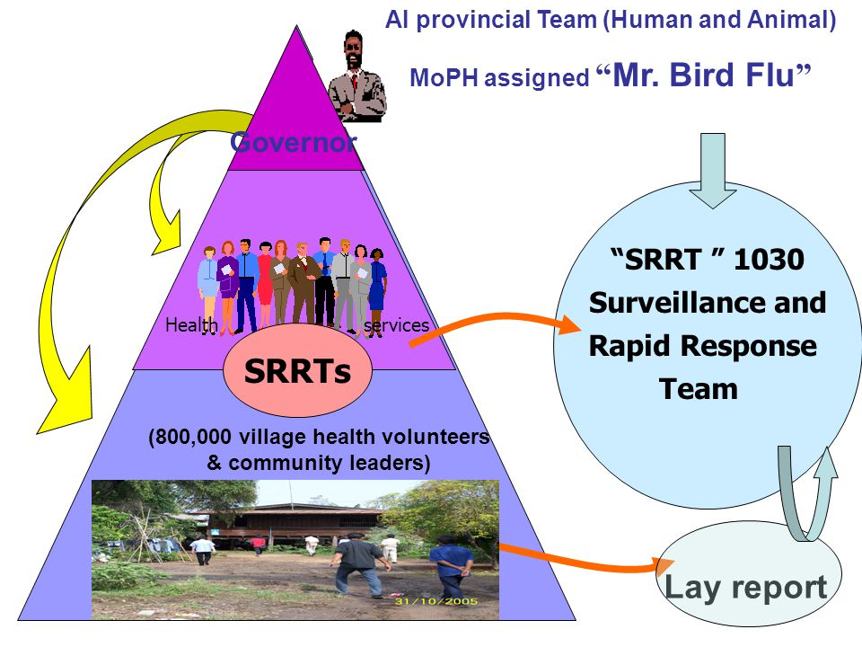SRRTs Lay report Governor SRRT 1030 Surveillance and Rapid Response