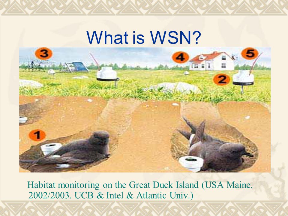 What is WSN. Habitat monitoring on the Great Duck Island (USA Maine.