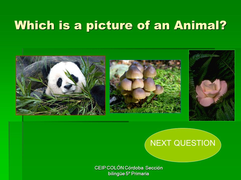 Which is a picture of an Animal