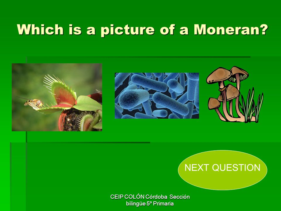 Which is a picture of a Moneran
