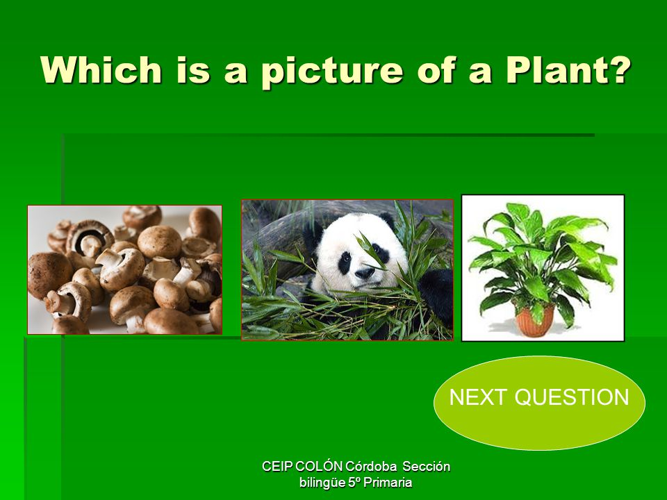 Which is a picture of a Plant