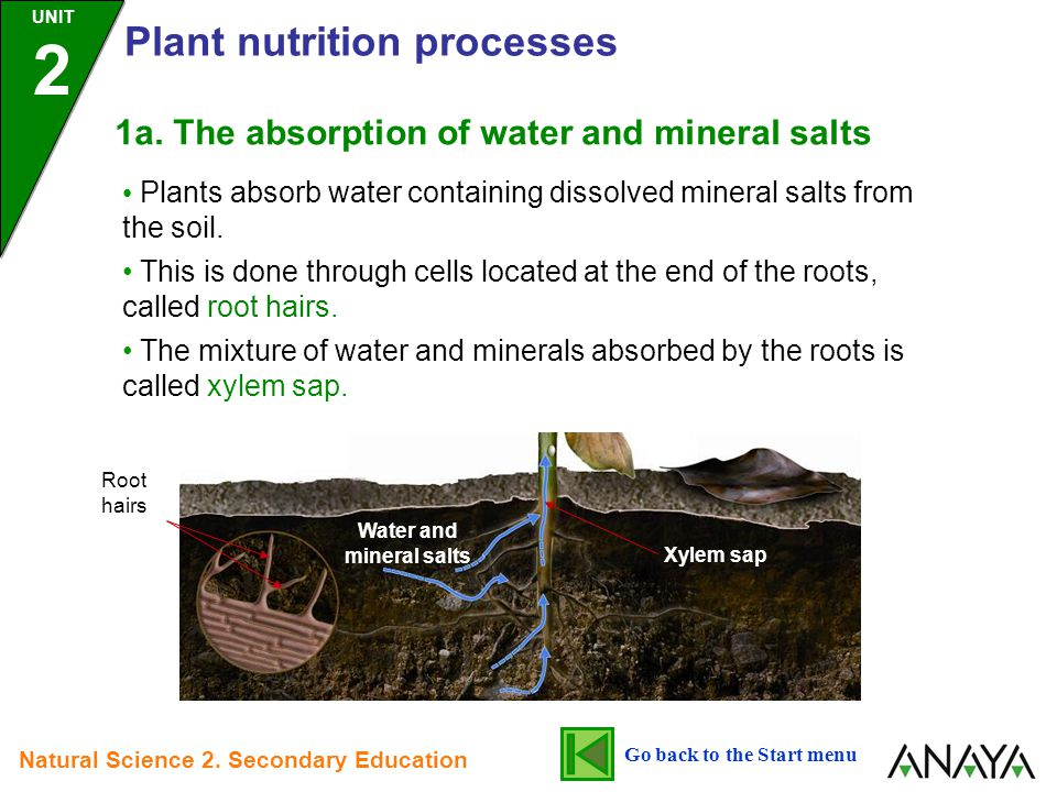 Water and mineral salts Go back to the Start menu