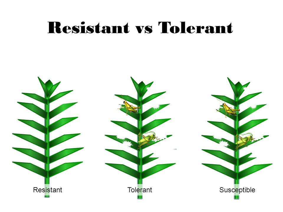 Resistant vs Tolerant Resistant Tolerant Susceptible