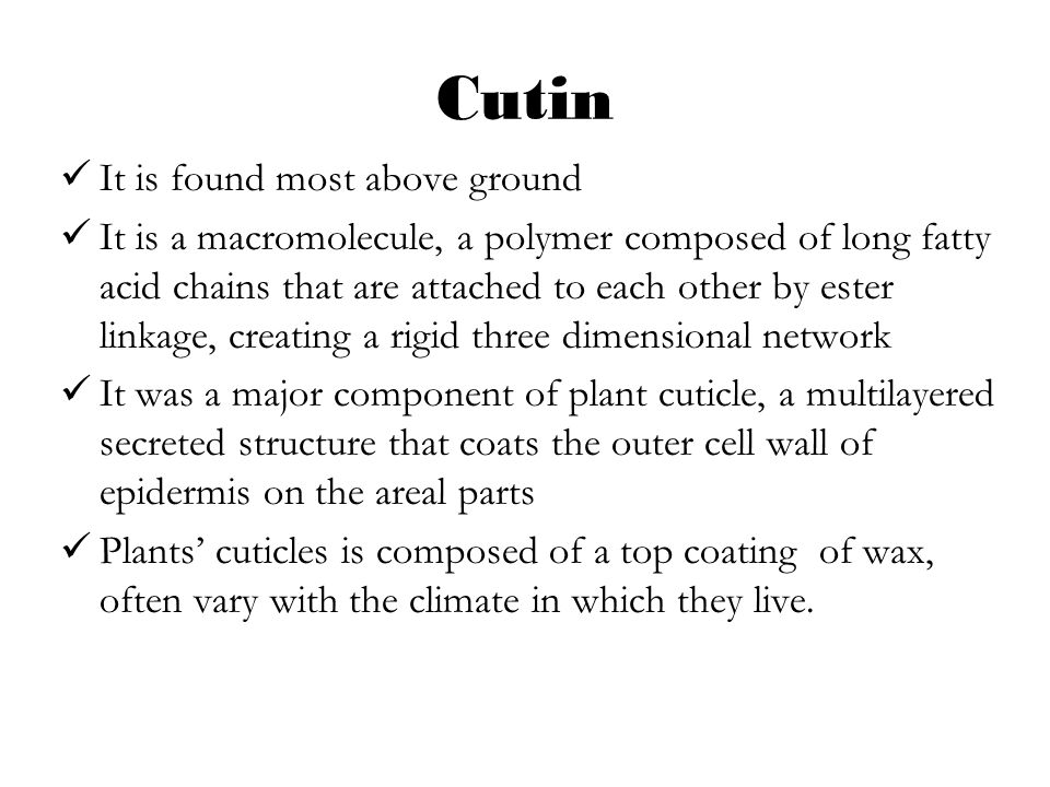 Cutin It is found most above ground