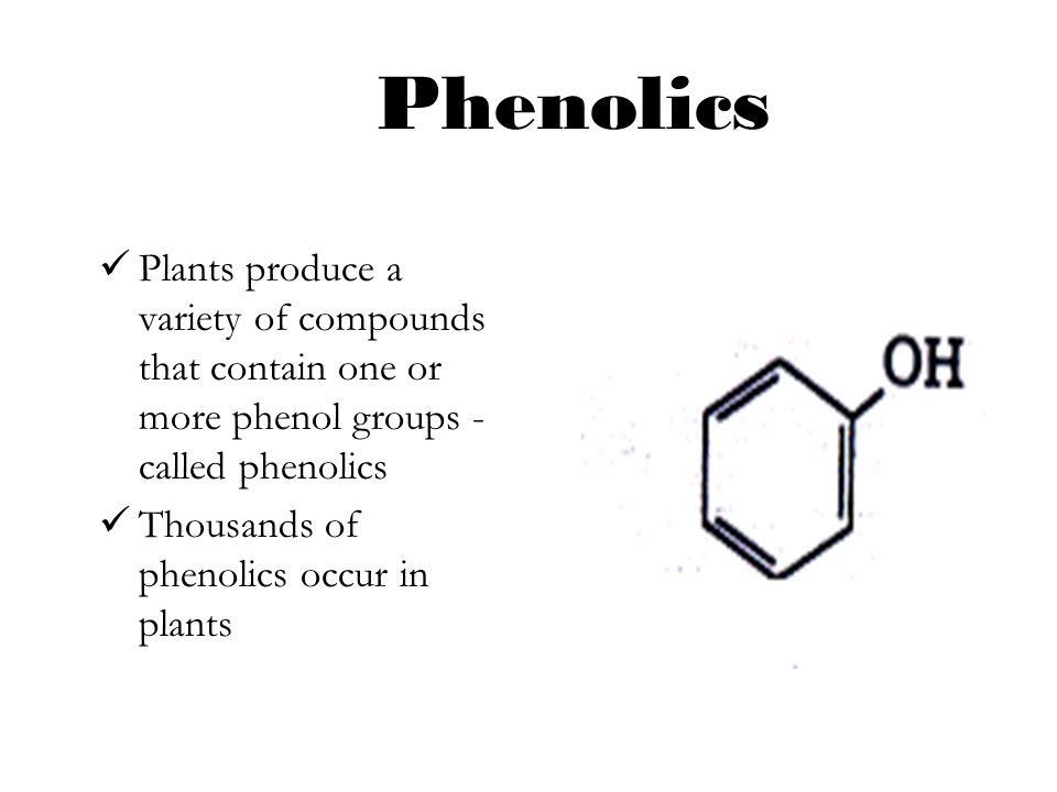 Phenolics Plants produce a variety of compounds that contain one or more phenol groups - called phenolics.