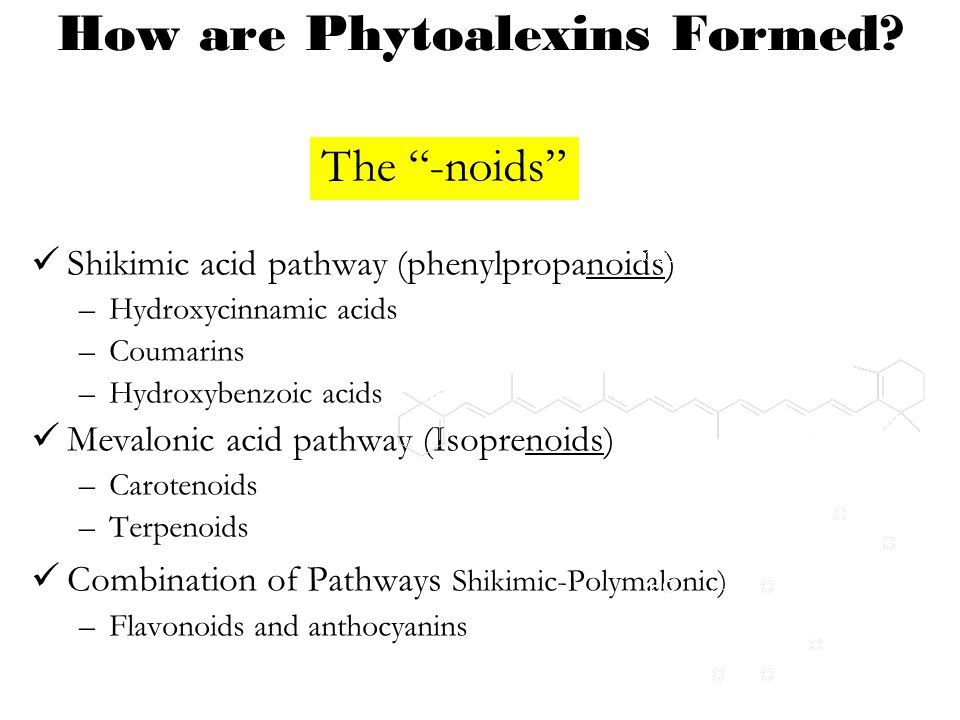 How are Phytoalexins Formed