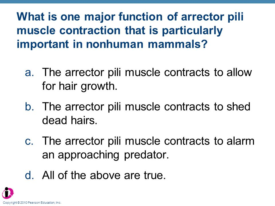 The arrector pili muscle contracts to allow for hair growth.