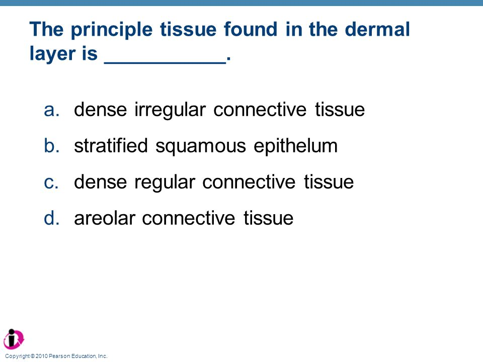 The principle tissue found in the dermal layer is ___________.