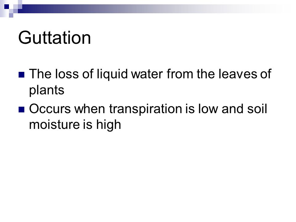 Guttation The loss of liquid water from the leaves of plants