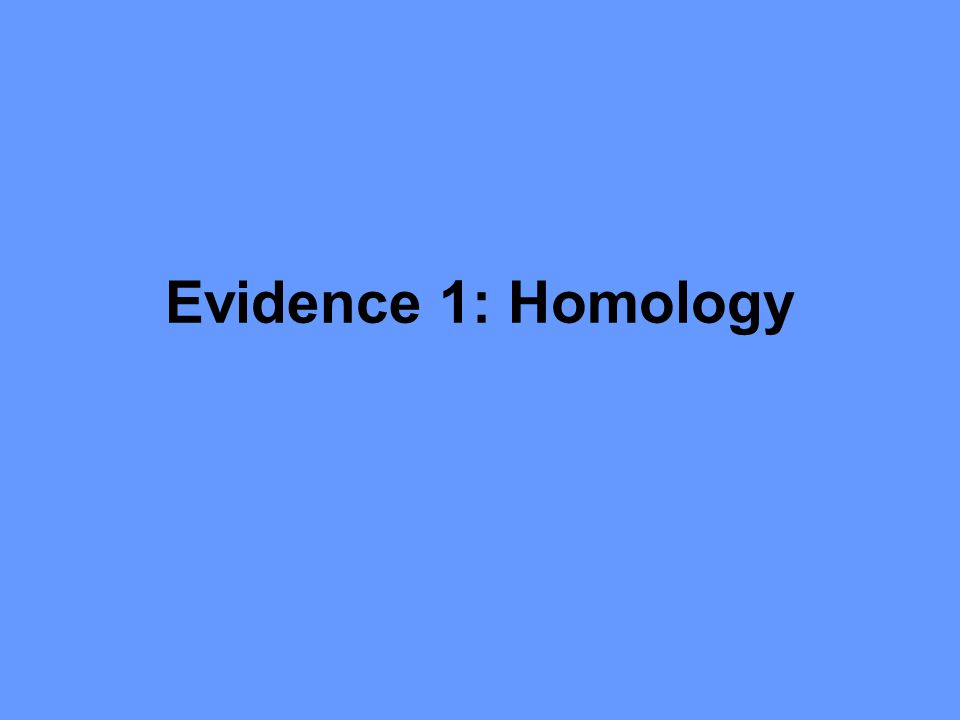 Evidence 1: Homology