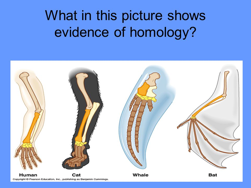 What in this picture shows evidence of homology