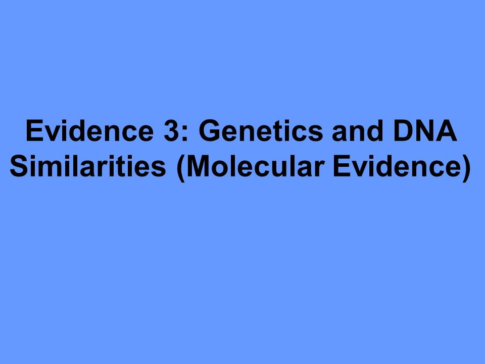 Evidence 3: Genetics and DNA Similarities (Molecular Evidence)