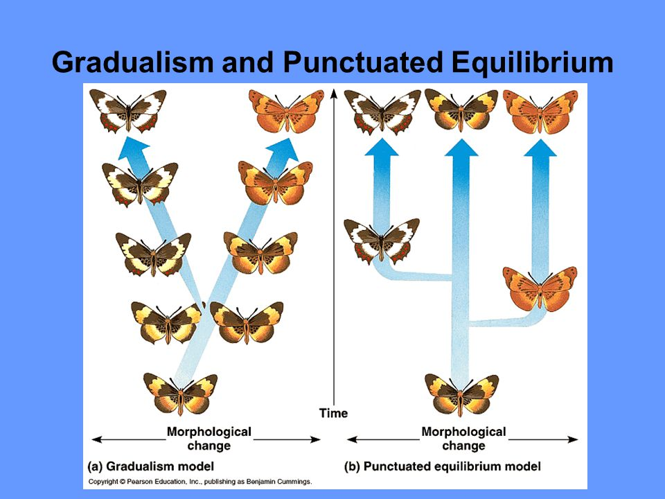Gradualism and Punctuated Equilibrium