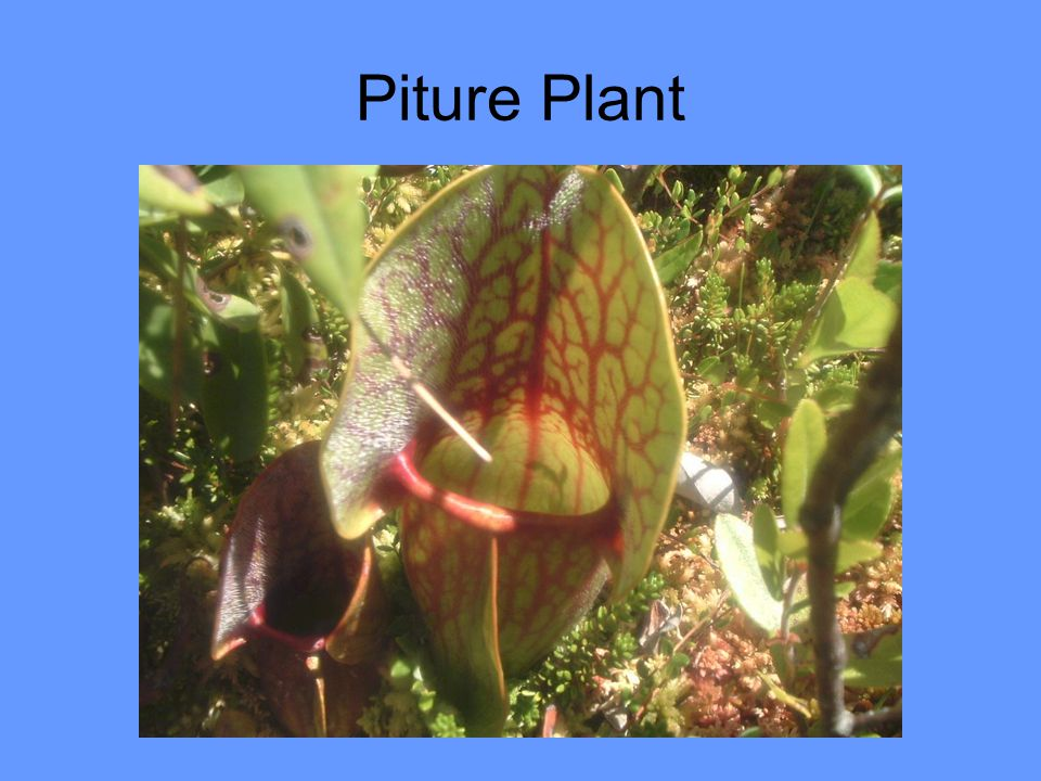 Piture Plant