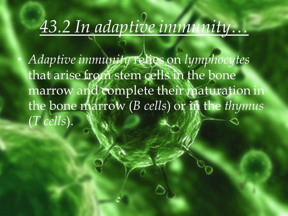 43.2 In adaptive immunity…
