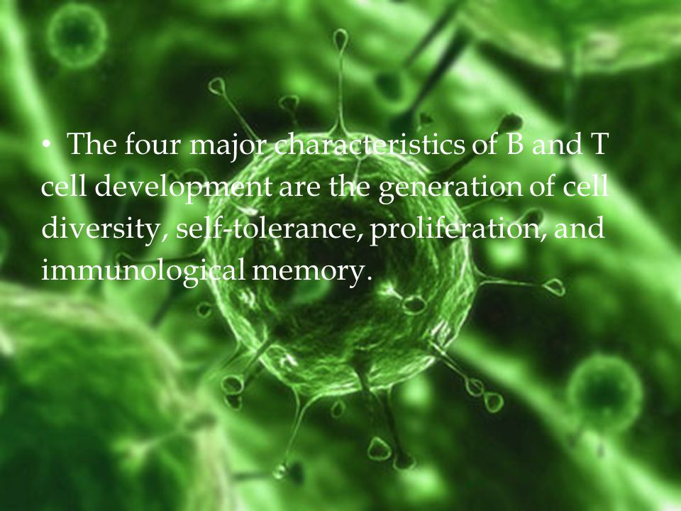 The four major characteristics of B and T cell development are the generation of cell diversity, self-tolerance, proliferation, and immunological memory.