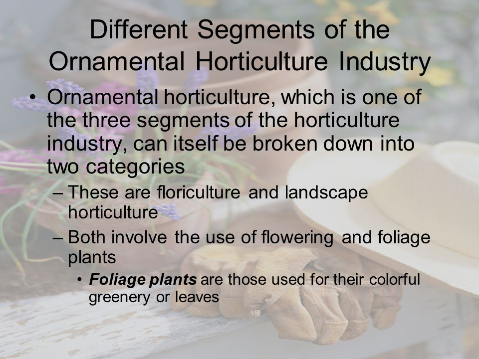 Different Segments of the Ornamental Horticulture Industry