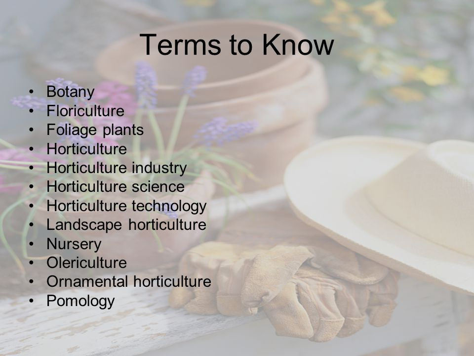 Terms to Know Botany Floriculture Foliage plants Horticulture