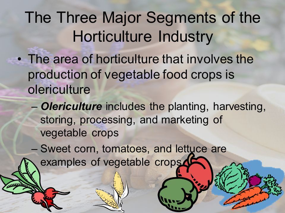 The Three Major Segments of the Horticulture Industry