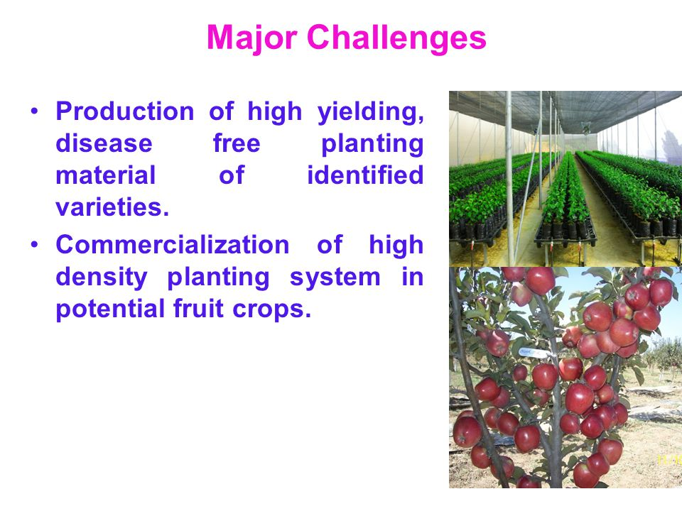 Major Challenges Production of high yielding, disease free planting material of identified varieties.