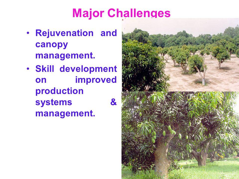 Major Challenges Rejuvenation and canopy management.