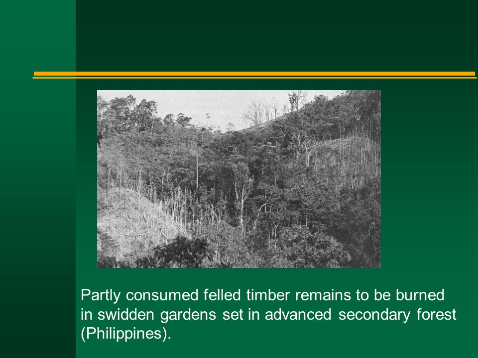 Partly consumed felled timber remains to be burned in swidden gardens set in advanced secondary forest (Philippines).