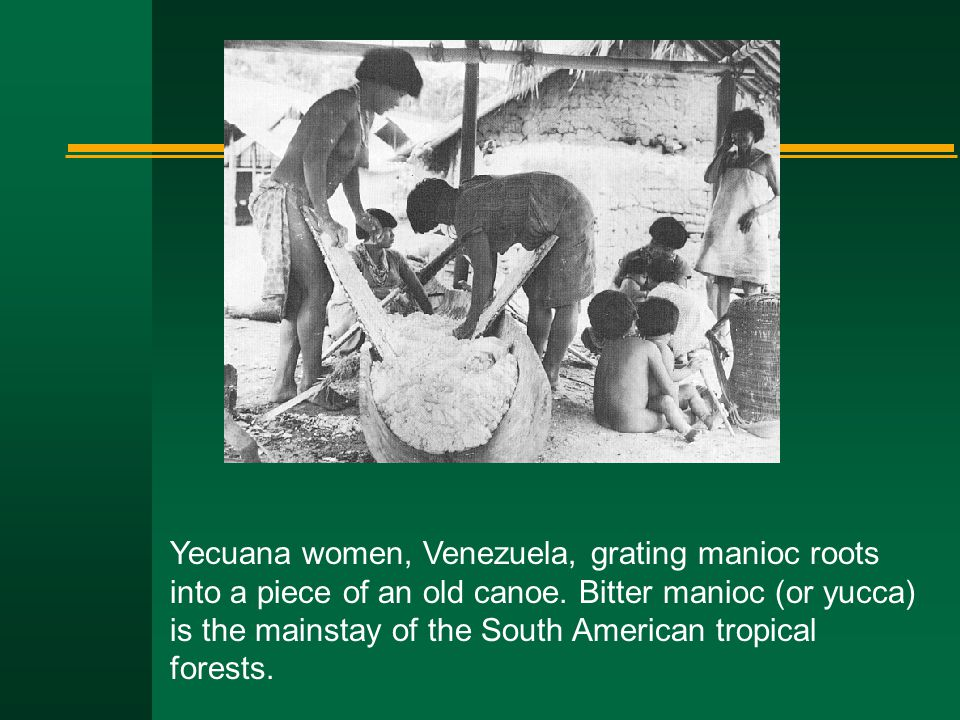 Yecuana women, Venezuela, grating manioc roots into a piece of an old canoe.