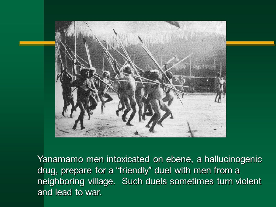 Yanamamo men intoxicated on ebene, a hallucinogenic drug, prepare for a friendly duel with men from a neighboring village.