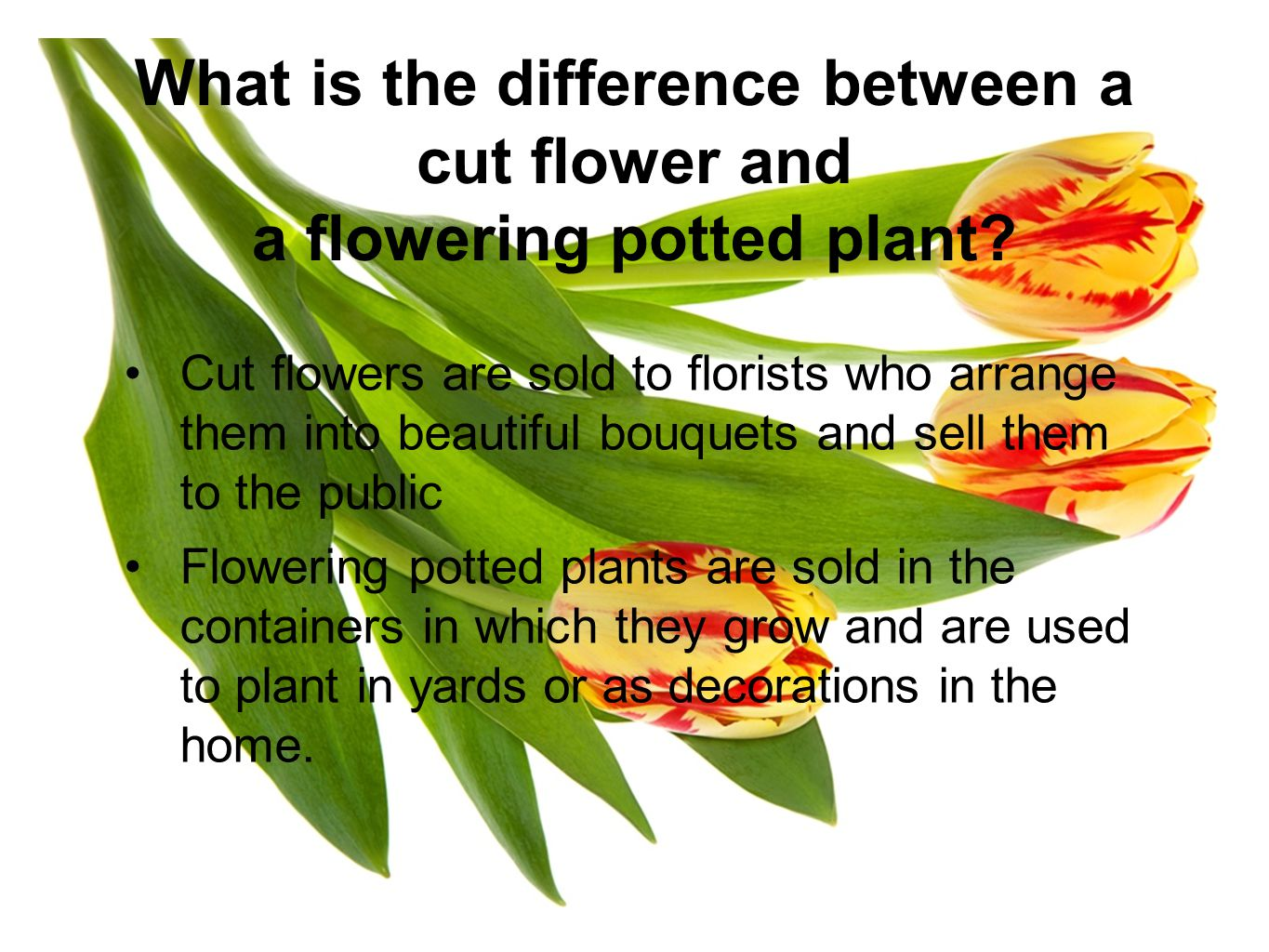 What is the difference between a cut flower and a flowering potted plant