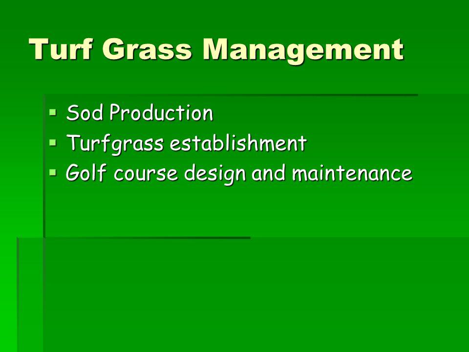 Turf Grass Management Sod Production Turfgrass establishment