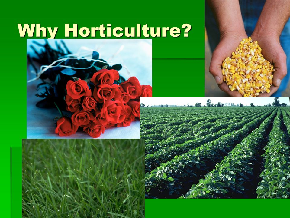 Why Horticulture