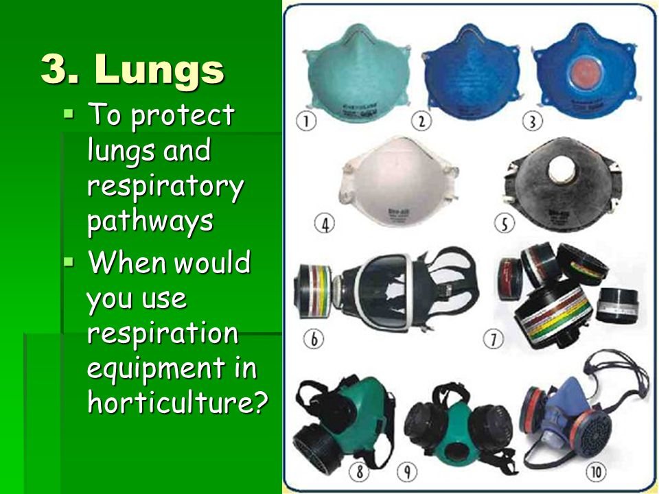 3. Lungs To protect lungs and respiratory pathways