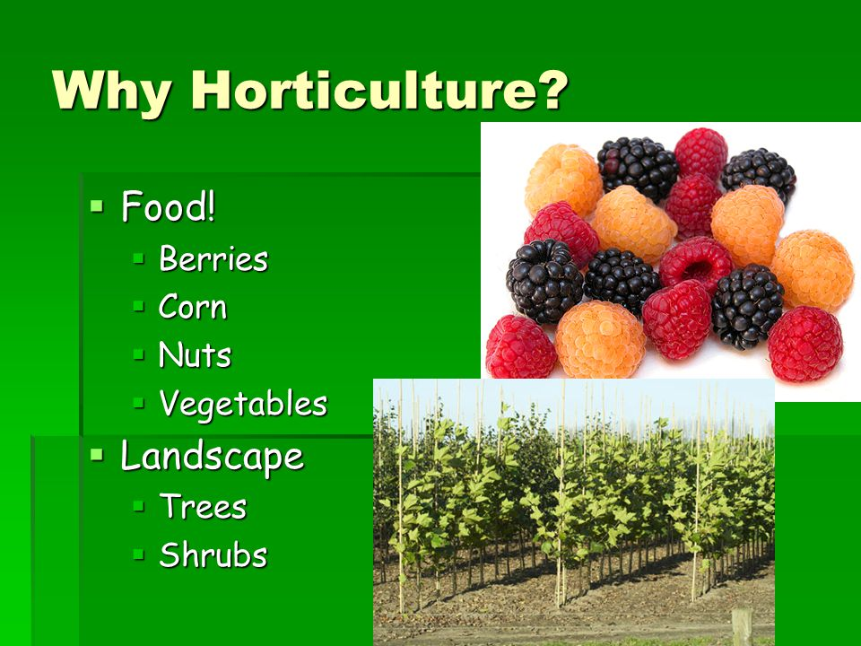 Why Horticulture Food! Landscape Berries Corn Nuts Vegetables Trees