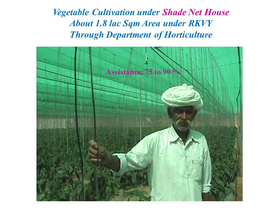 Vegetable Cultivation under Shade Net House