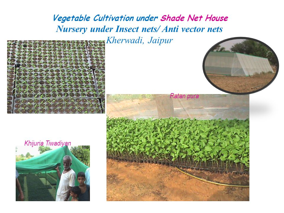 Nursery under Insect nets/ Anti vector nets