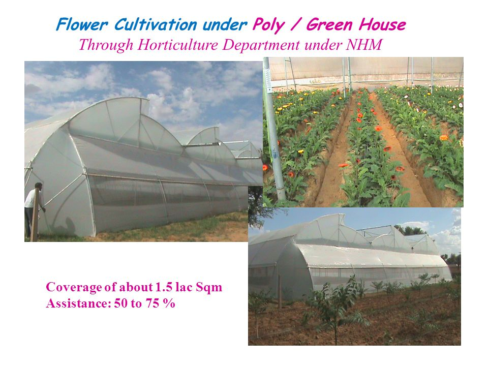 Flower Cultivation under Poly / Green House