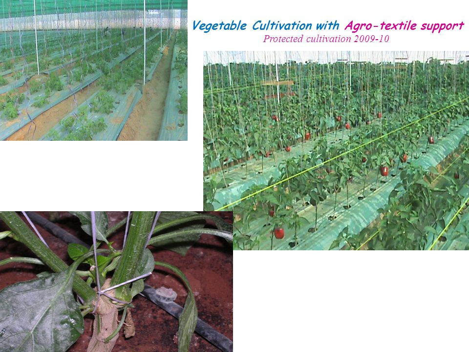 Vegetable Cultivation with Agro-textile support