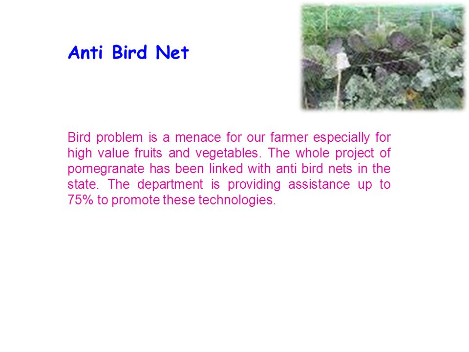 Anti Bird Net