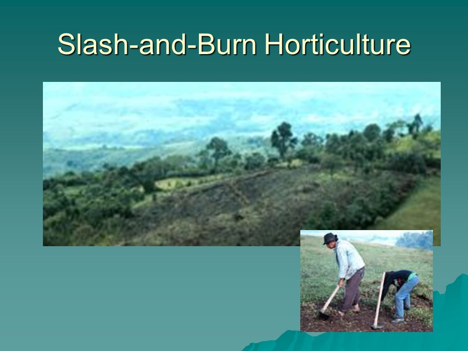 Slash-and-Burn Horticulture