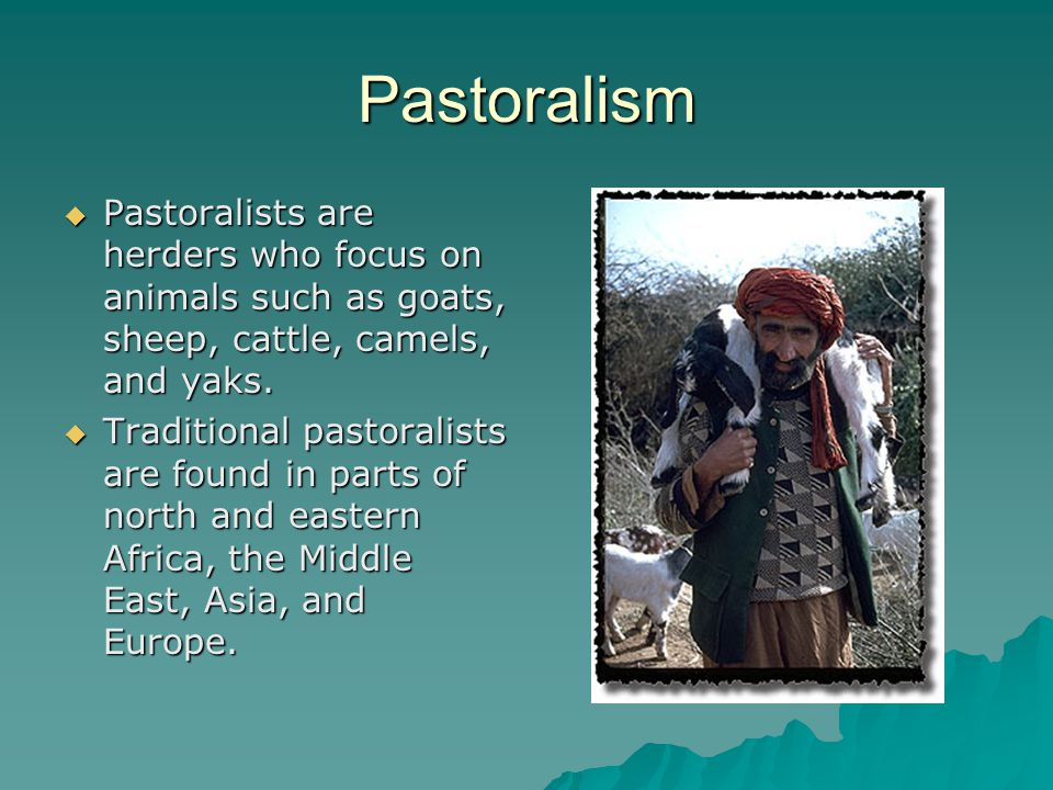 Pastoralism Pastoralists are herders who focus on animals such as goats, sheep, cattle, camels, and yaks.