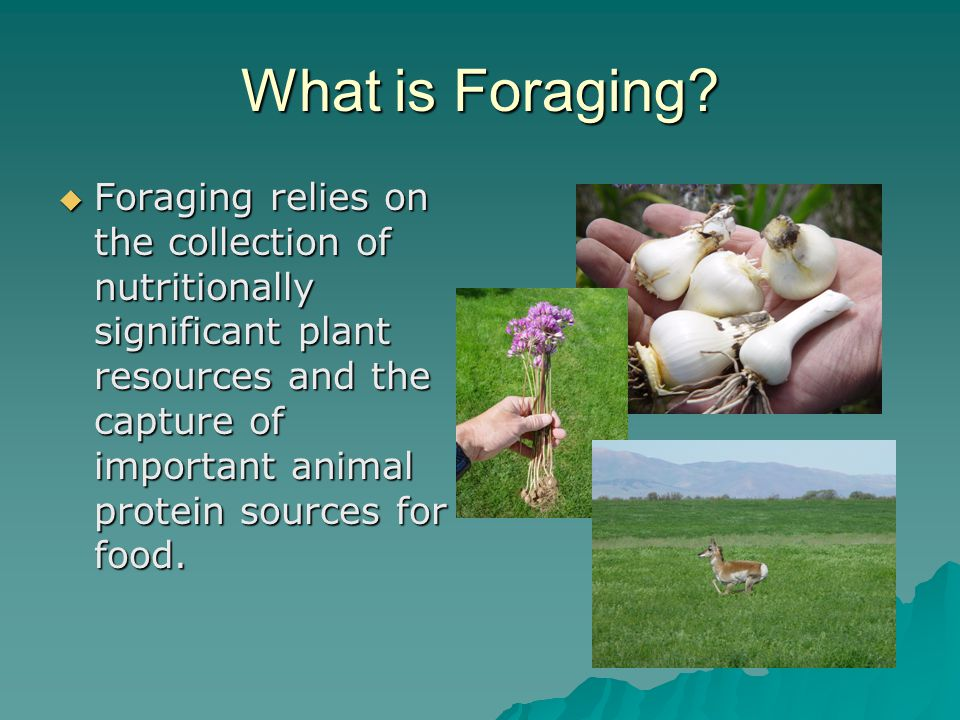 What is Foraging