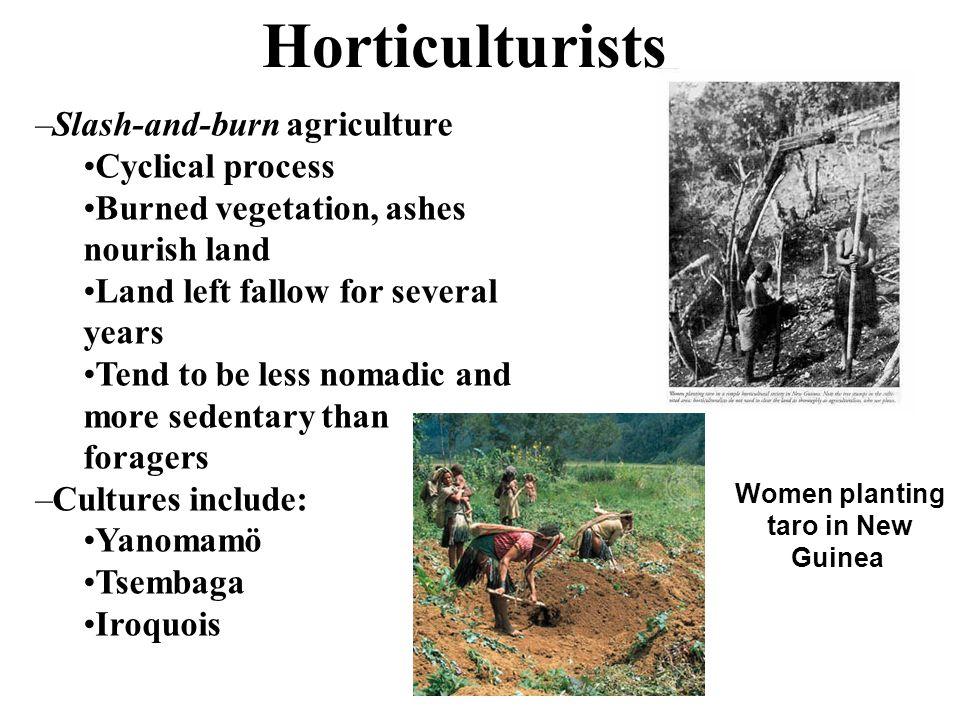 Women planting taro in New Guinea