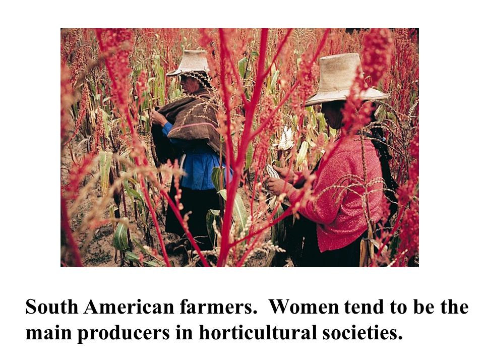 South American farmers