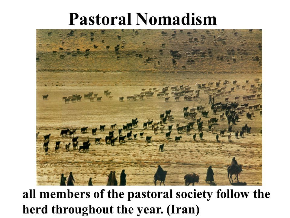 Pastoral Nomadism all members of the pastoral society follow the herd throughout the year. (Iran)