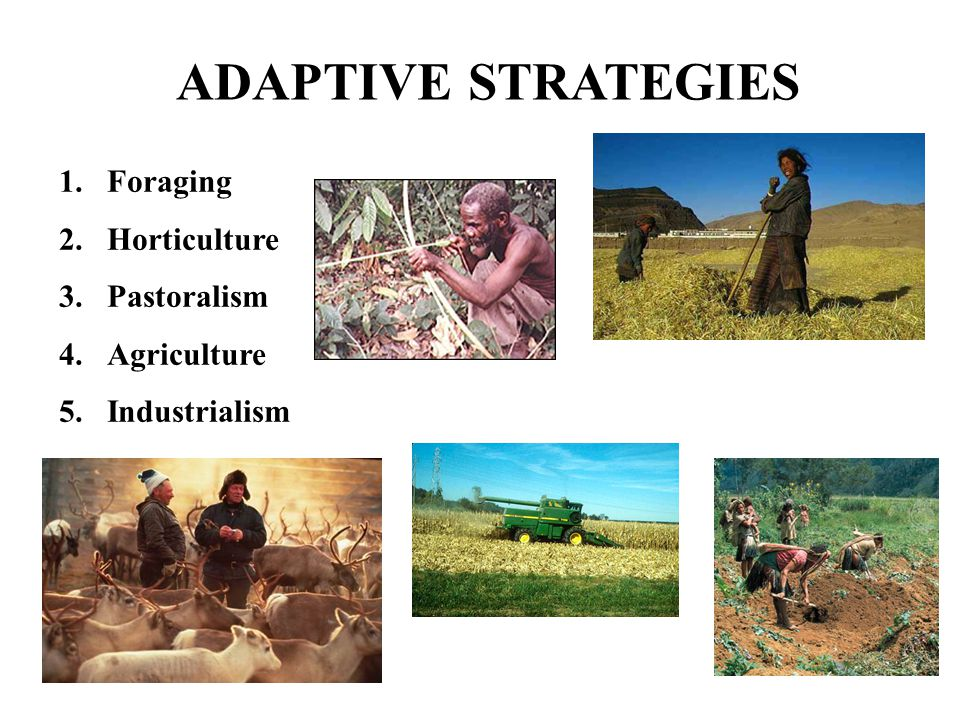 ADAPTIVE STRATEGIES Foraging Horticulture Pastoralism Agriculture